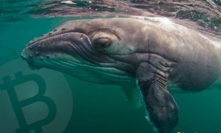 Whale Watch: Large Bitcoin Cash Holders Accumulate 1 Million BCH Since February